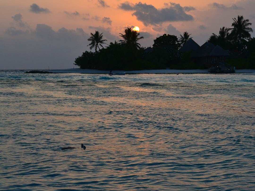 Oscar - Marine Savers Maldives - turtle conservation
