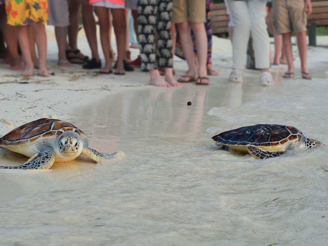 Oscar and Bodhi - Marine Savers Maldives - turtle conservation
