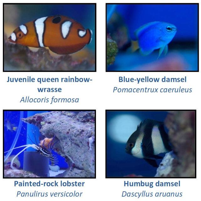 Fish Lab - new arrivals - Marine Savers Maldives