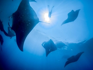 Lynn Internship - Marine Savers Maldives [photo by Simon Hilbourne, Manta Trust]
