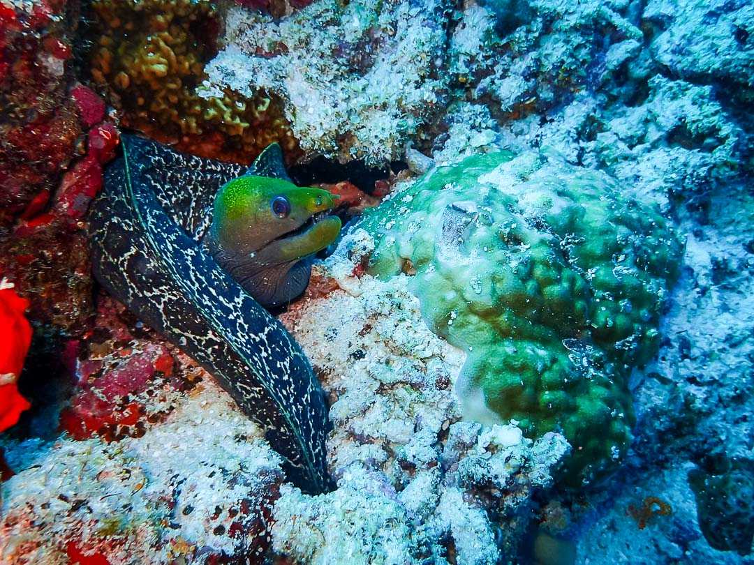 Lynn Internship - underwater life - Marine Savers Maldives