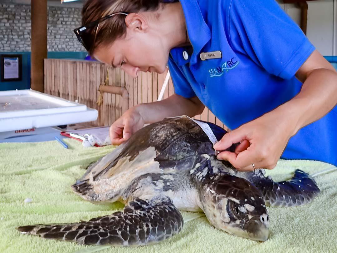 Boo - sea turtle conservation Maldives Marine Savers