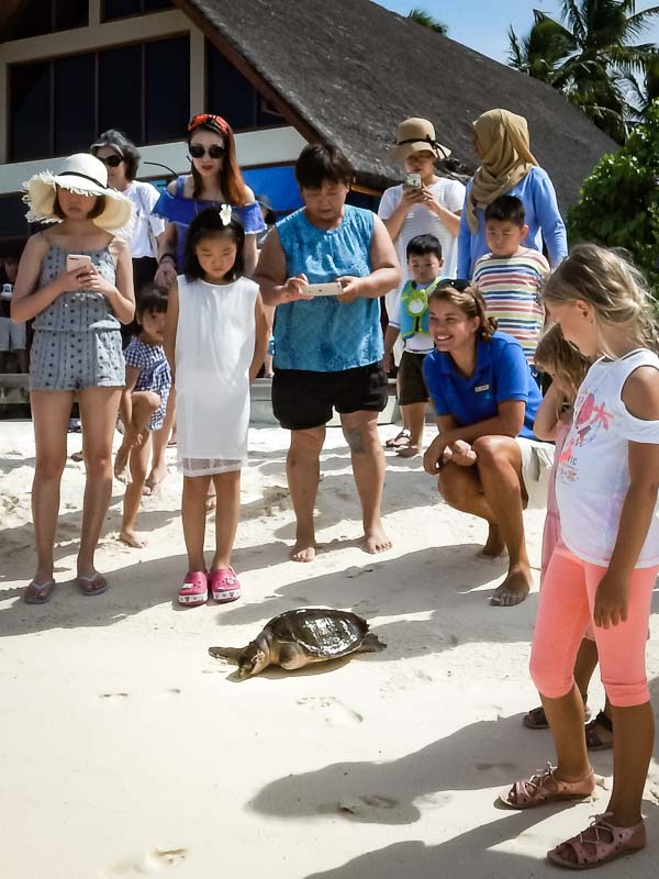 Faaz – turtle release day – Marine Savers Maldives (3)
