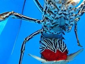 (Marine Life – Lab and Ocean)