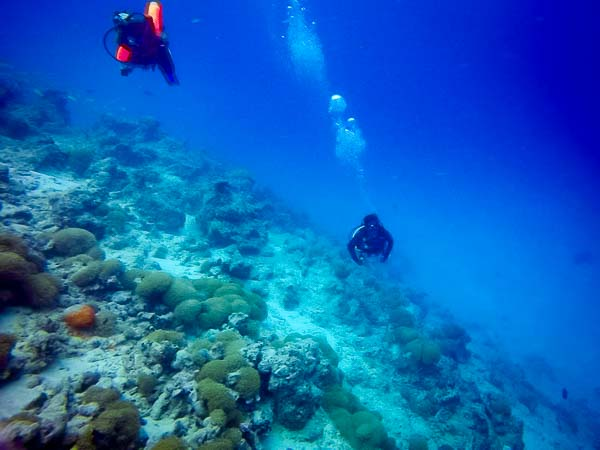 Irene's Internship – Marine Savers Maldives – diving