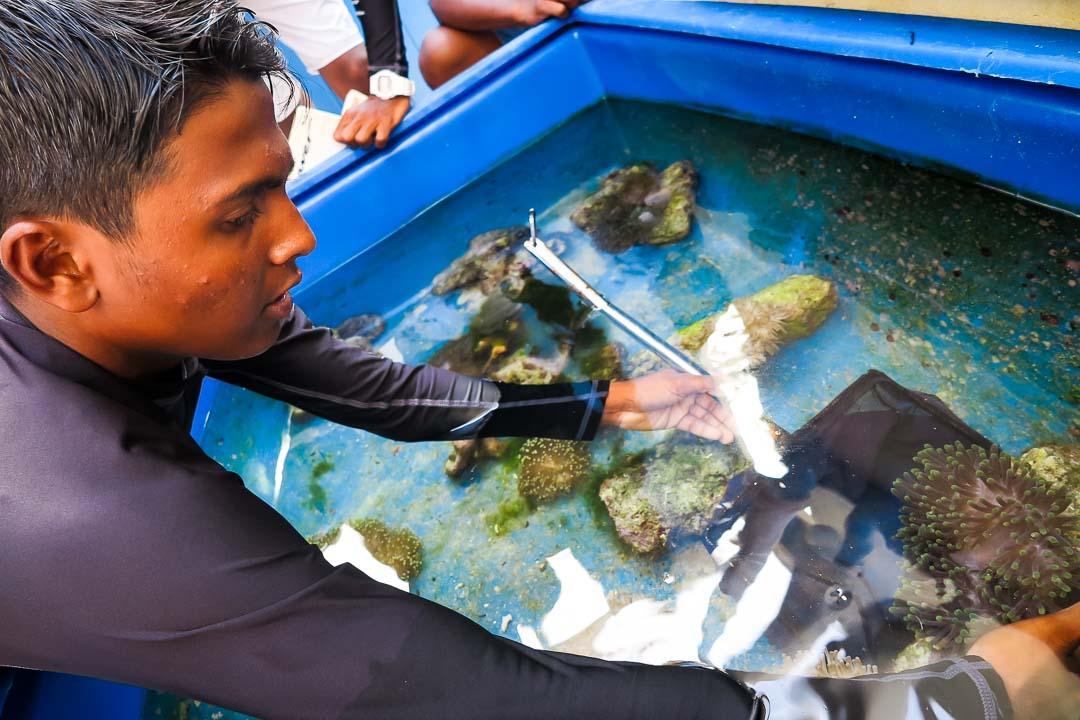Apprenticeship programme, Four Seasons Resorts, Marine Savers Maldives (3)