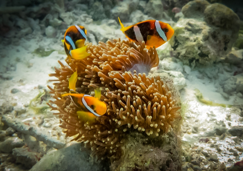 Updates From Our Marine Biology Teams