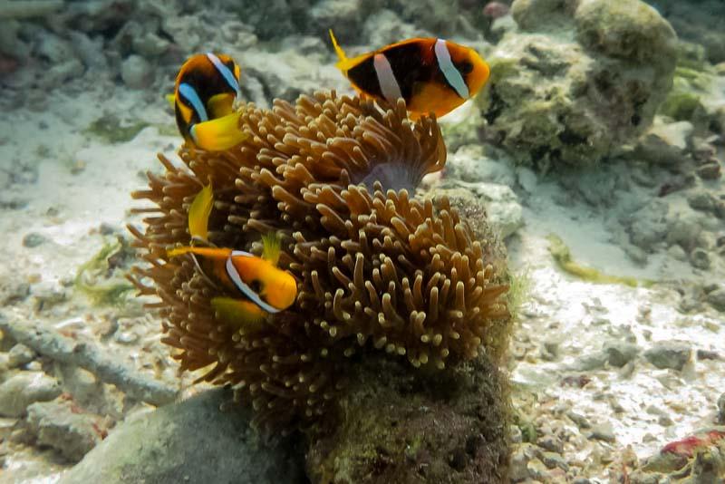 Apprenticeship programme, Four Seasons Resorts, Marine Savers Maldives (4)