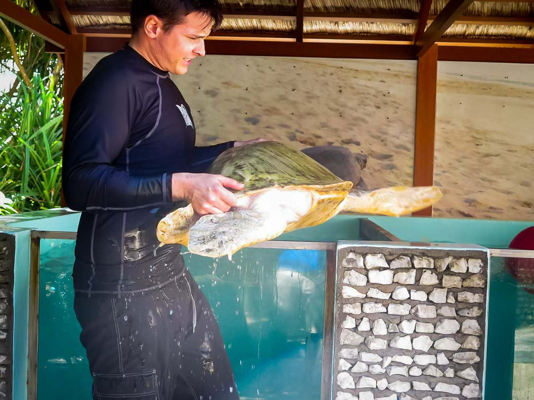 Greg Internship - Marine Savers Maldives