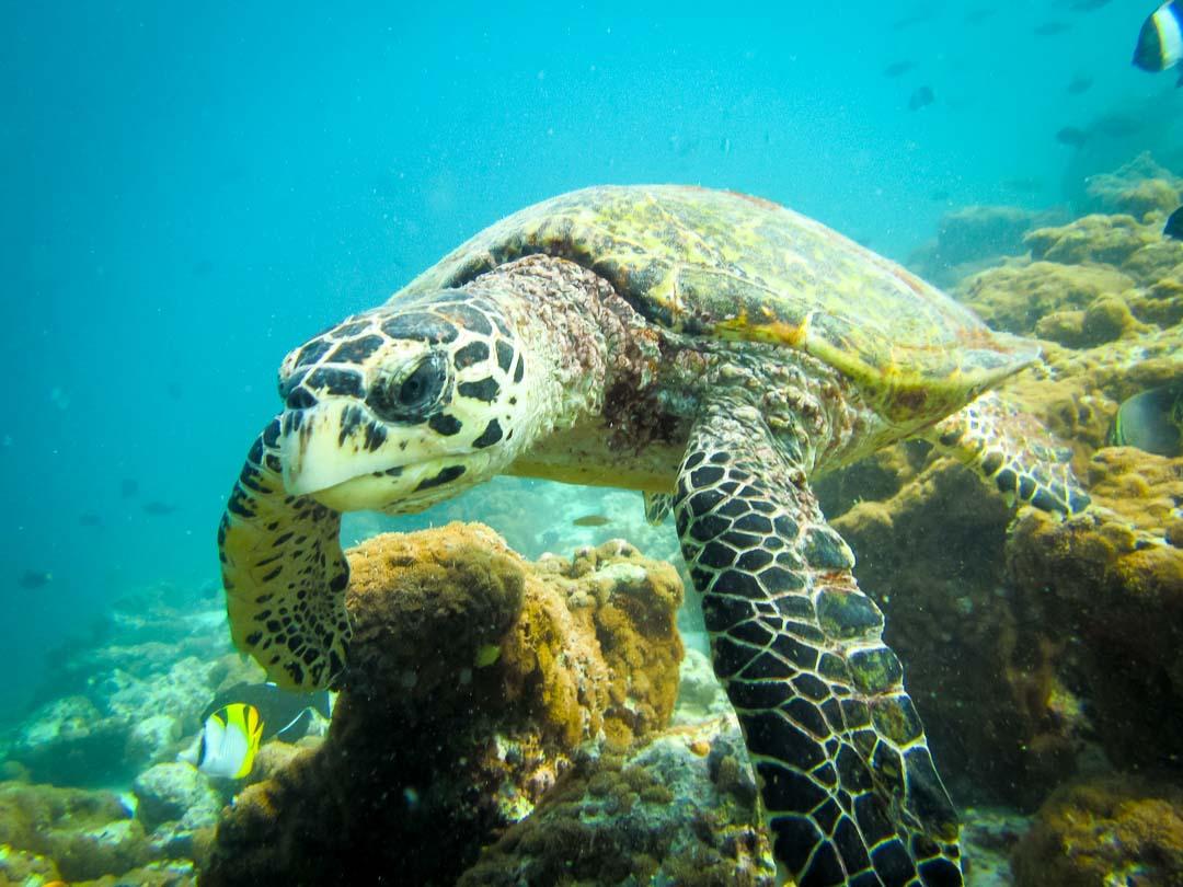 Greg's internship Marine Savers Maldives (5)