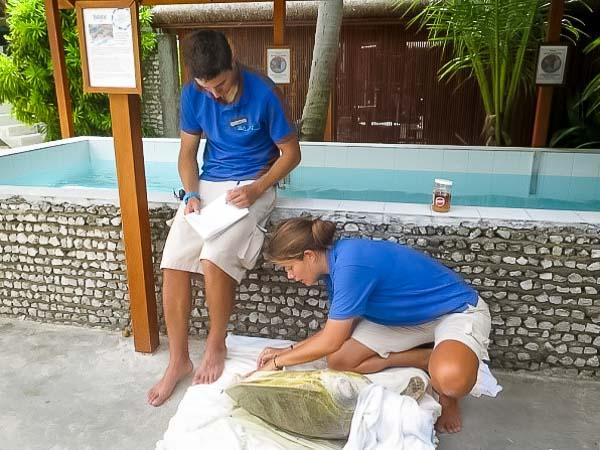 Jean-Gabriel Internship – Marine Savers Maldives – turtle care
