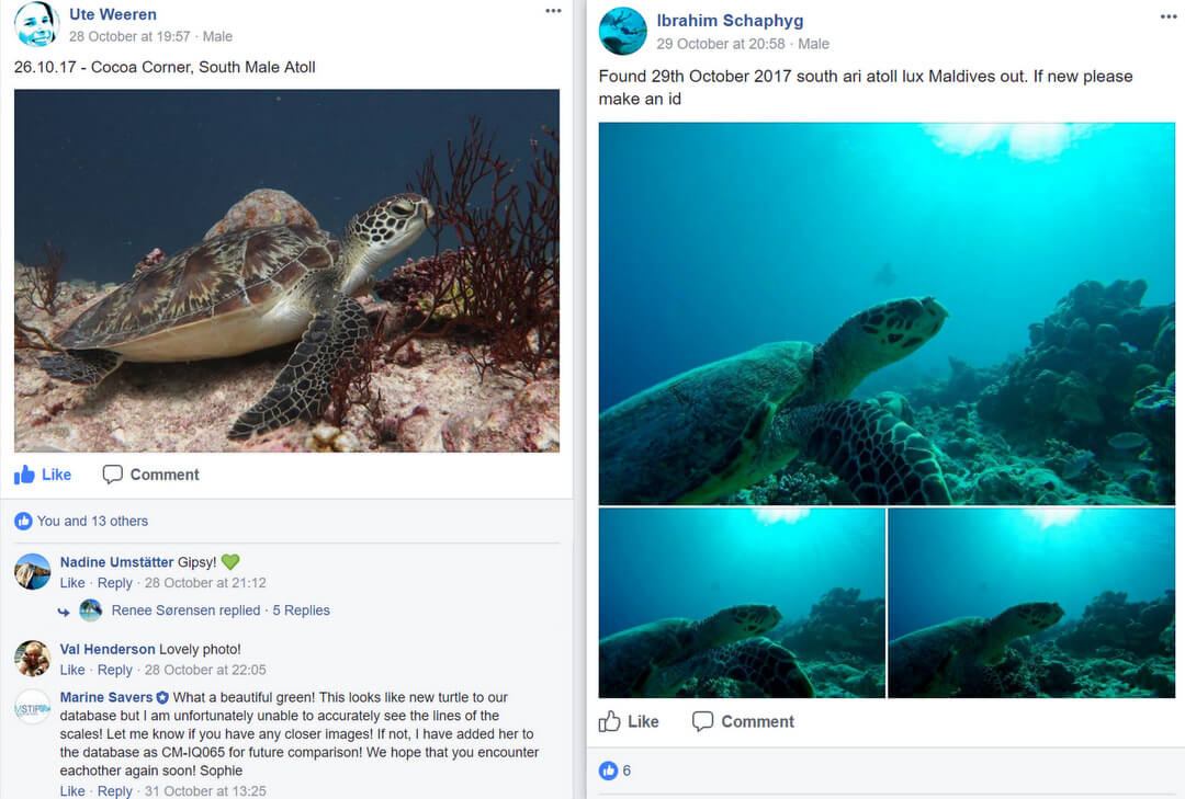 Maldivian Turtle ID Project - Marine Savers Maldives - Facebook photo submissions
