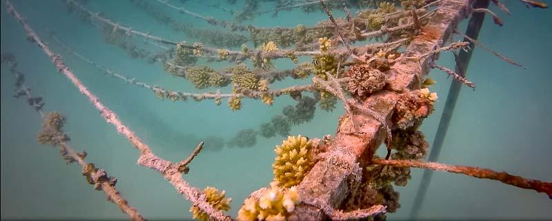 Coral propagation lines at Gili Lankanfushi Maldives [KH 2018.03]