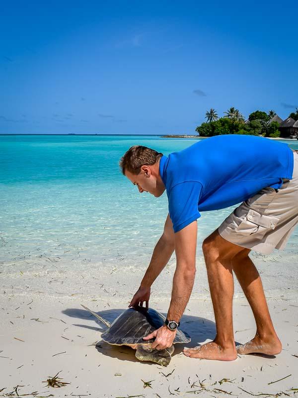 Donny's release (6) turtle rehabilitation Marine Savers Maldives