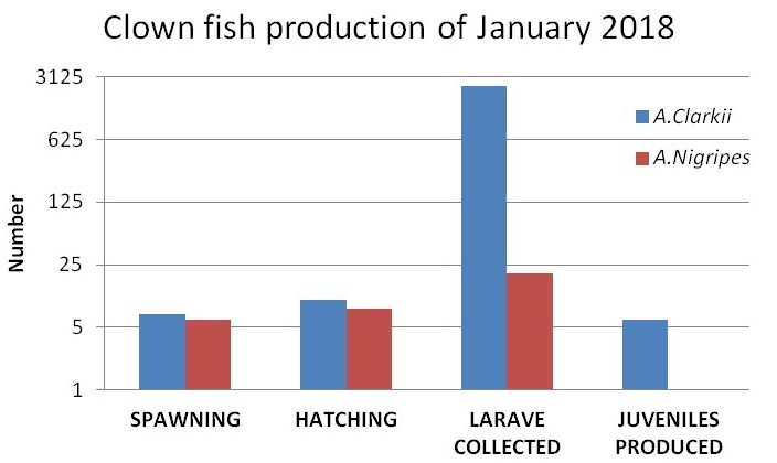 Fish Lab - clownfish production Marine Savers Maldives