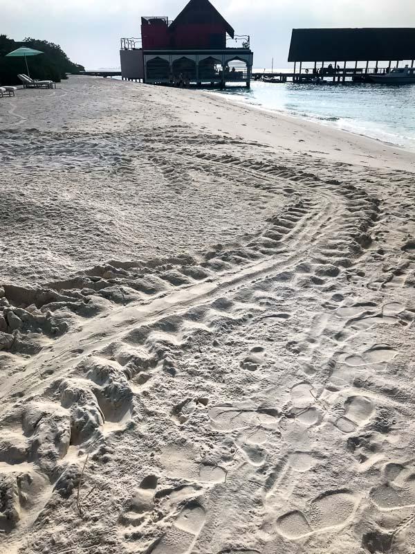 Green turtle beach tracks, Maldives Marine Savers