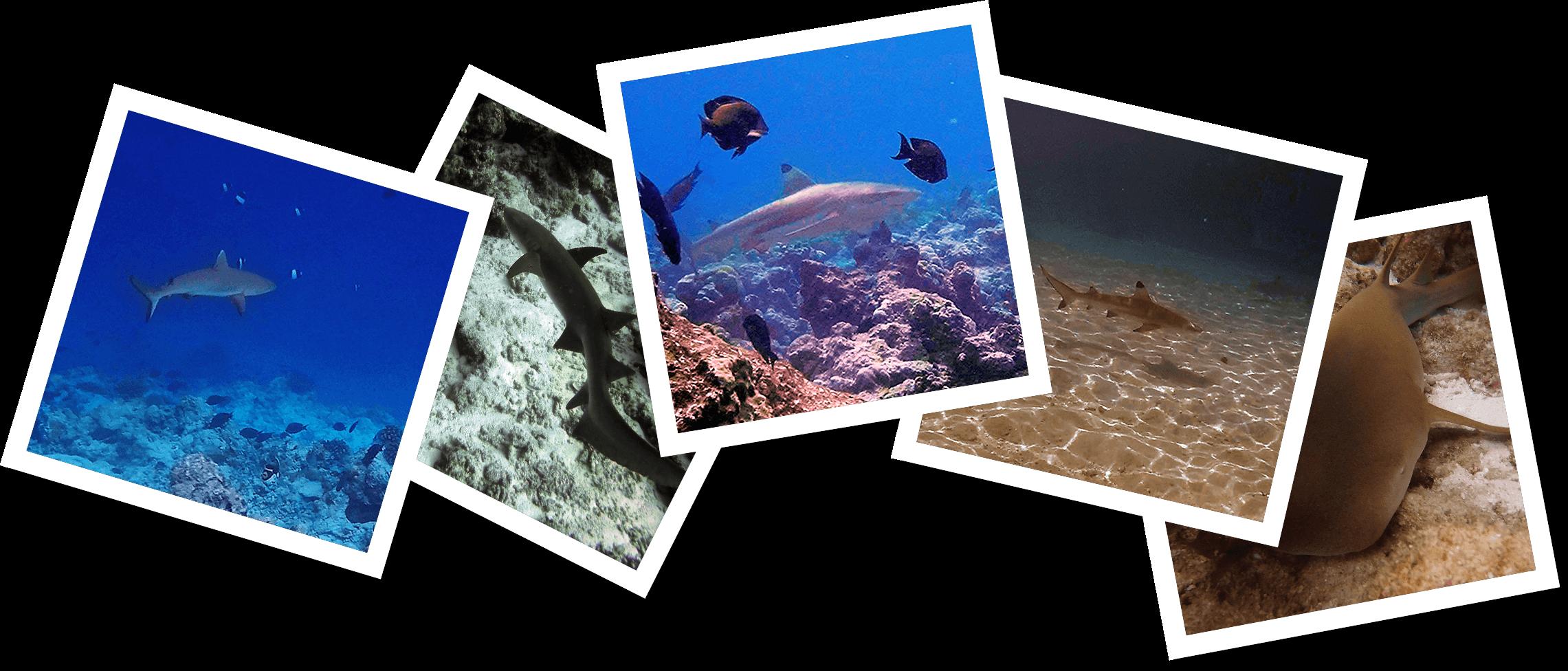 Marine biology internship Maldives – Thije (3)c