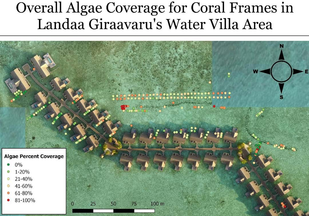 Reefscapers coral frames algae coverage Maldives [Tiana] (2)