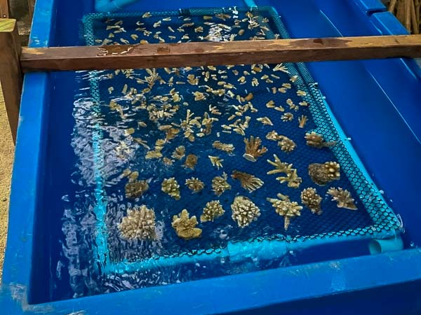 Reefscapers coral nursery Maldives [LG 2018.04] (2)