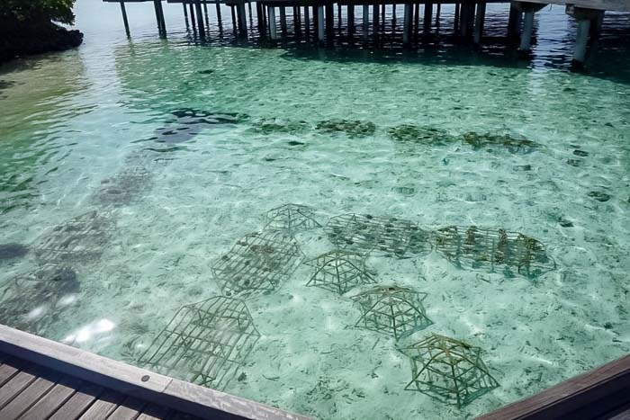 Reefscapers geometric pattern of coral frames Maldives [KH 2018.06] (2)