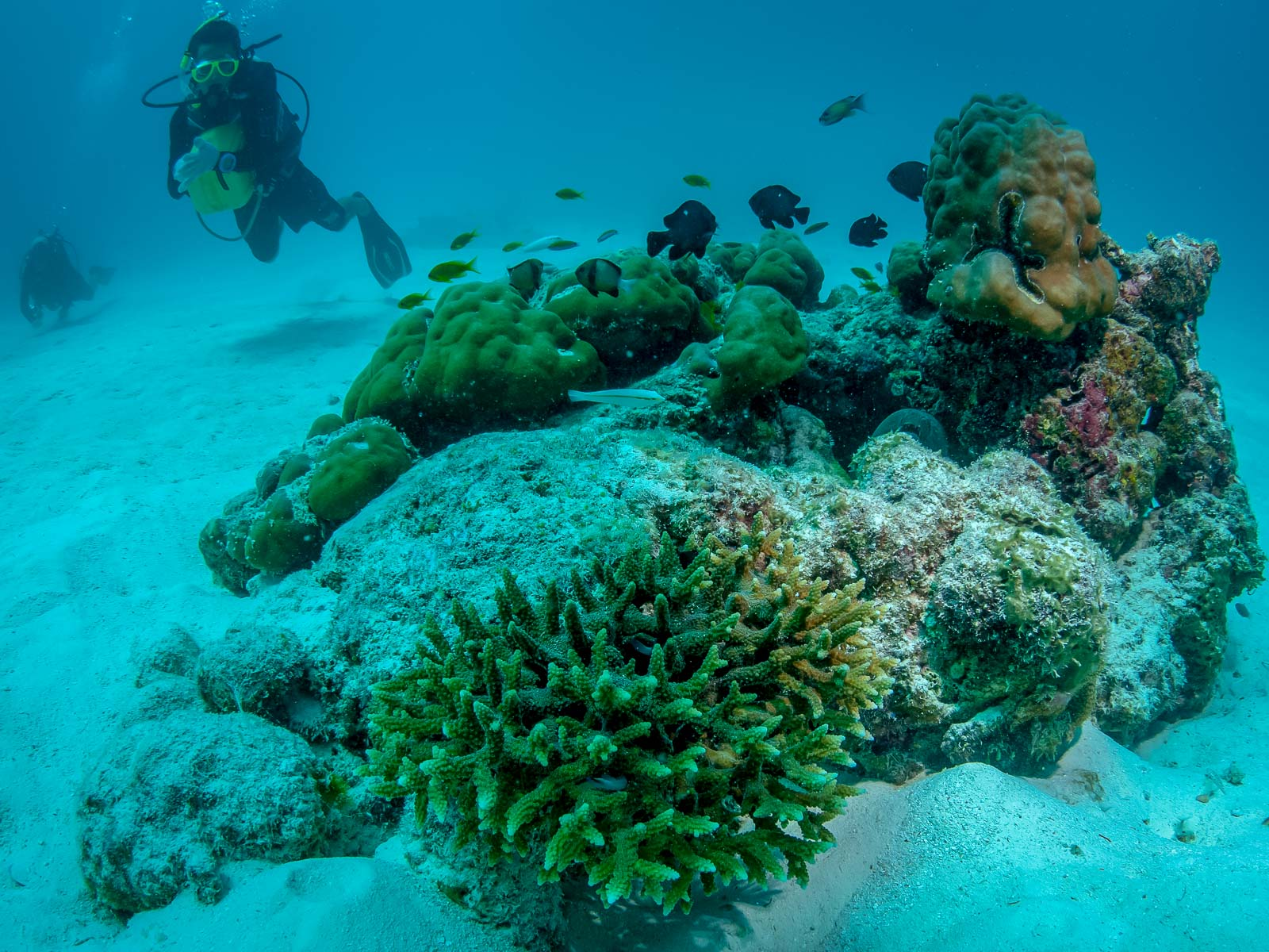 Reefscapers - healthy wild coral colonies on the reef Marine Savers Maldives
