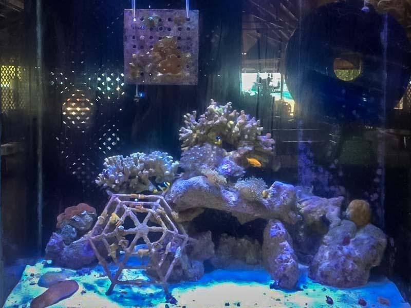 Aquarium 2, Kuda Huraa, Maldives