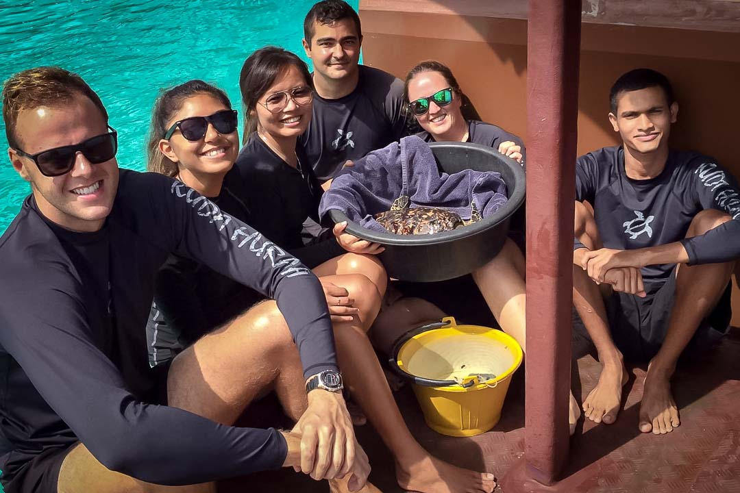 Rescue Hawksbill turtle Renee release Marine Savers Maldives (2)