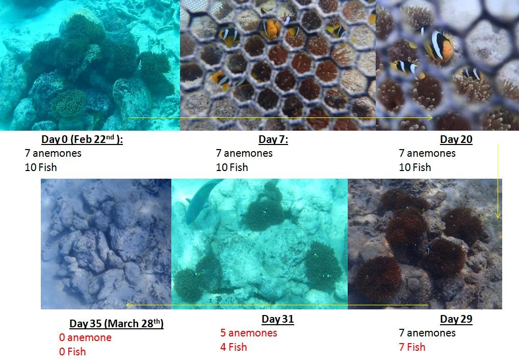 Fish Lab - clownfish breeding and release Marine Savers Maldives