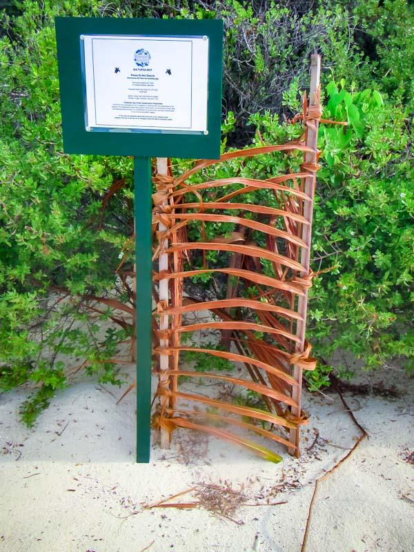 Green Turtle nest at Landaa Giraavaru (nest #6)