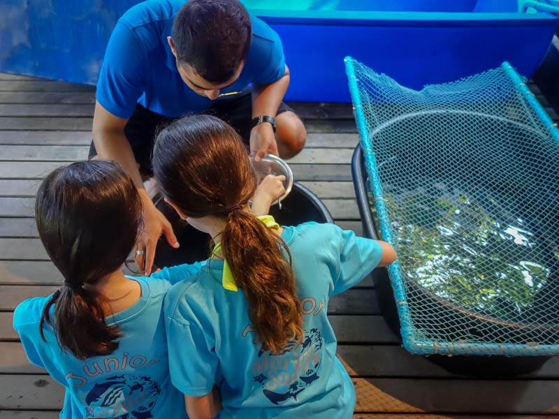 Junior Marine Savers help with Turtle Feeding