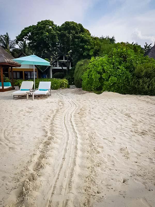 Turtle nest tracks, Landaa Giraavaru Maldives [FB]