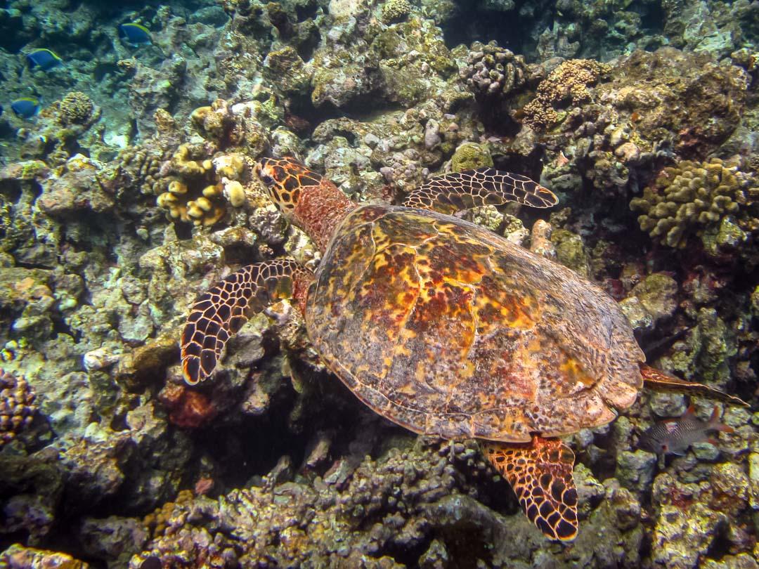 Tiana's Marine Biology internship, Maldives (3)