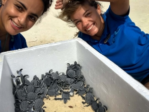 Green Turtle hatchlings emerging from nest [19-May-18] Marine Savers Maldives (5) (Latest Marine Biology Updates)