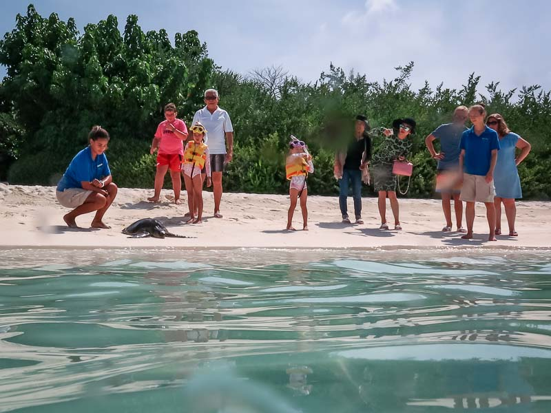 Taissya rescue Olive Ridley turtle Marine Savers Maldives (0726)