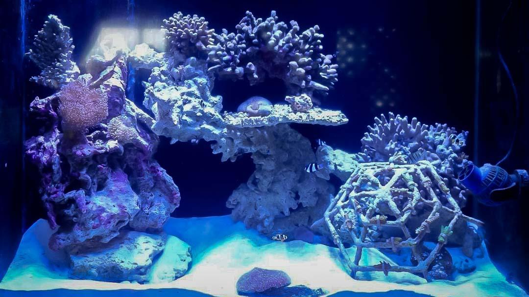 Marine aquarium 1 at Kuda Huraa