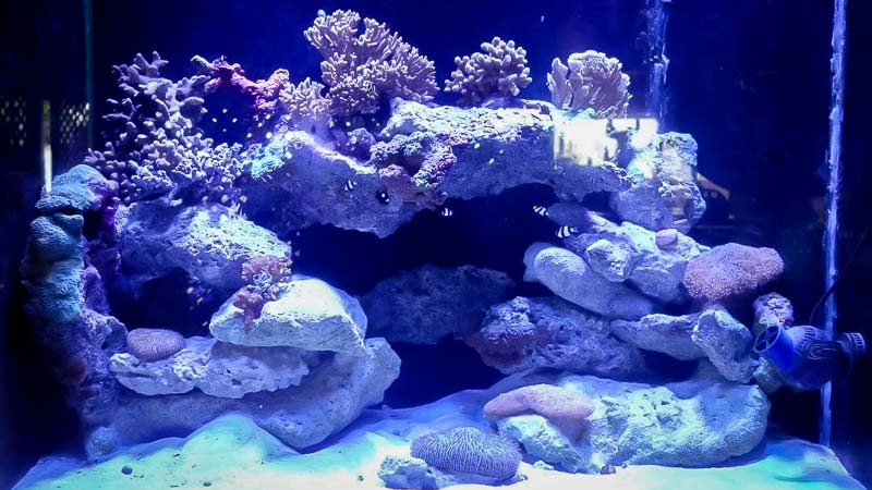 Marine aquarium 2 at Kuda Huraa