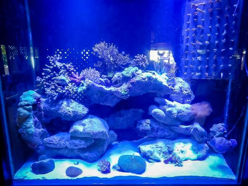 Aquarium 2 Marine Savers Maldives