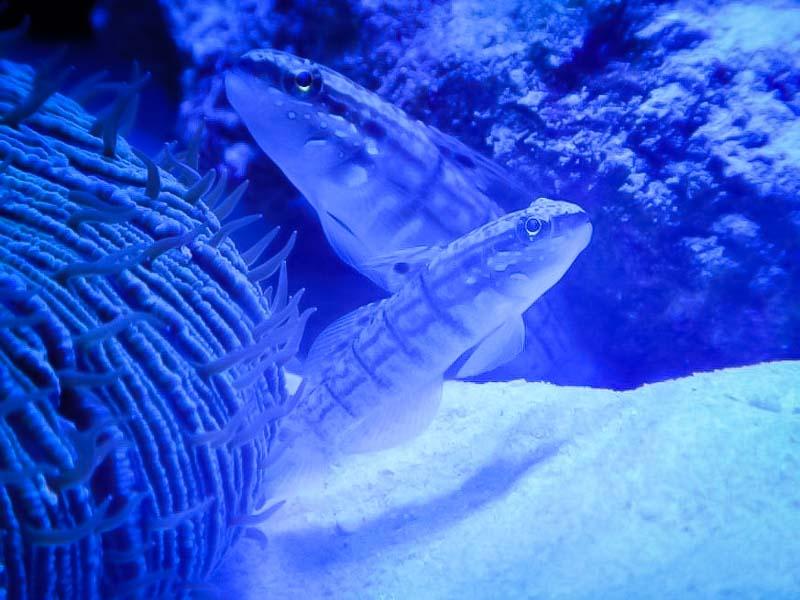 Aquarium 1 Marine Savers Maldives