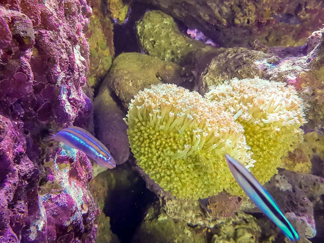 Large marine aquarium Marine Savers Maldives (2)