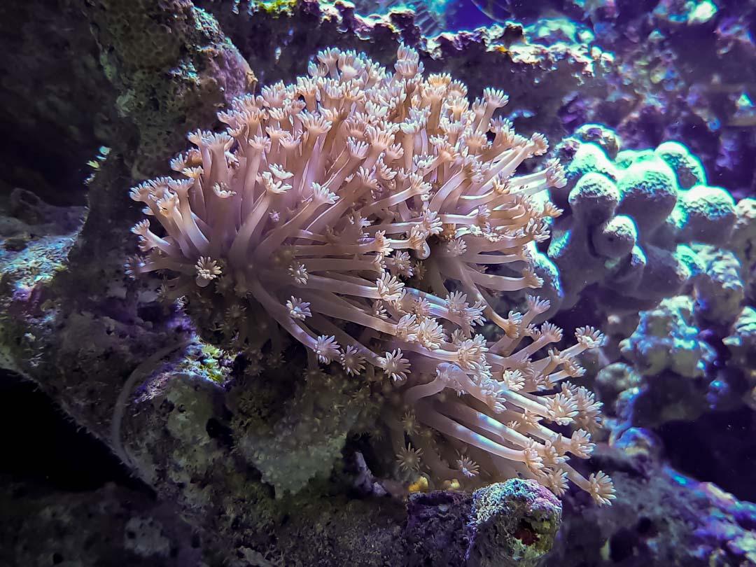 Large marine aquarium Marine Savers Maldives (5)