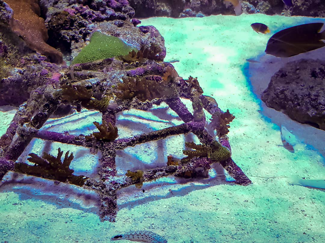 Large marine aquarium Marine Savers Maldives (7)