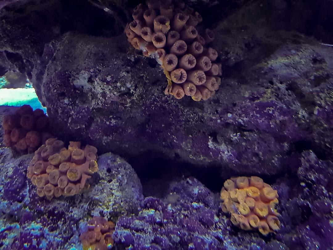 Large marine aquarium Marine Savers Maldives (9) - Nippled sponge