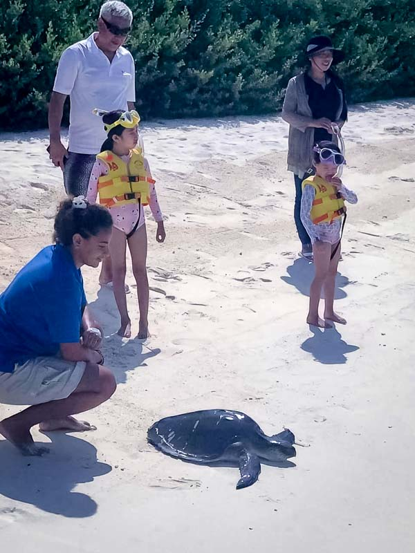 Lea's Marine Biology internship Maldives (6) turtle release