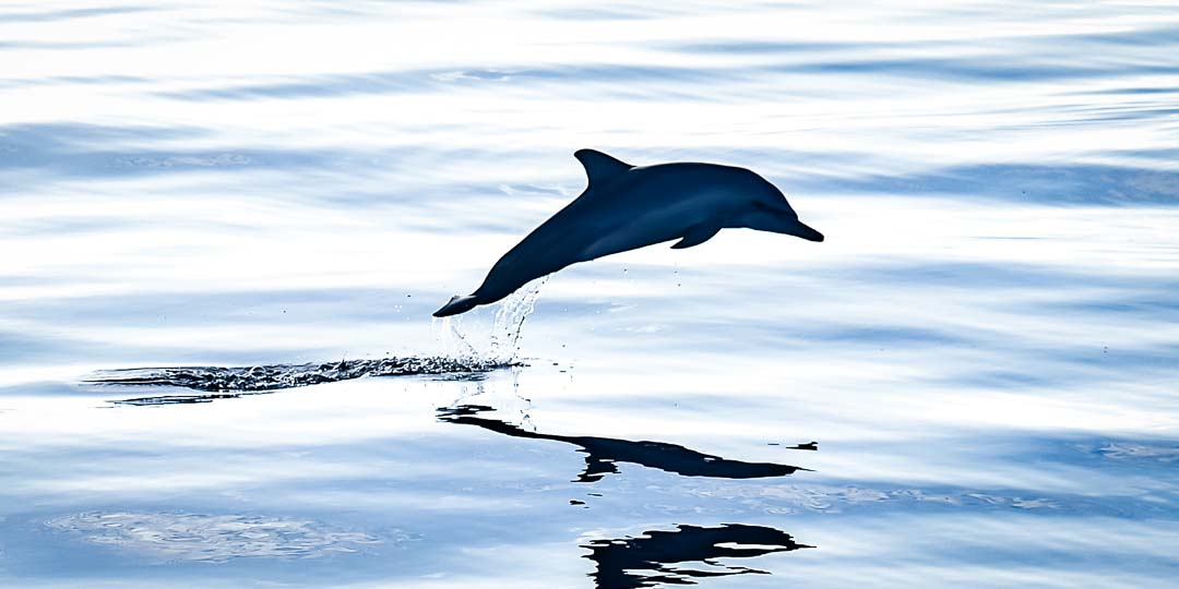 Dolphin safari – Marine Savers Maldives (2) 16×9