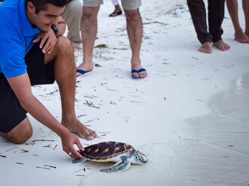 Smash turtle release Marine Savers Maldives (0024)