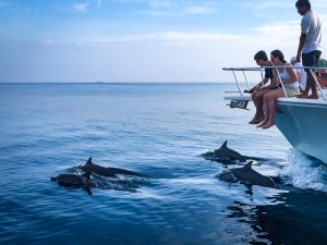 Julia marine biology intern Reefscapers Maldives dolphins