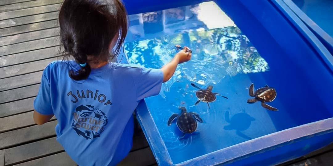 Junior Marine Savers help with turtle care – child activities Maldives