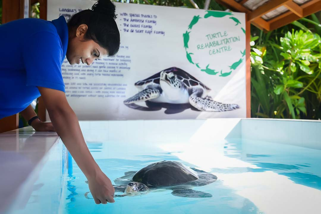 Turtle rescue centre at Marine Savers Landaa Giraavaru, Maldives