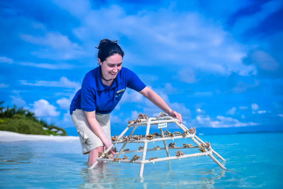 Reefscapers coral frame sponsorship - coral propagation project, Maldives
