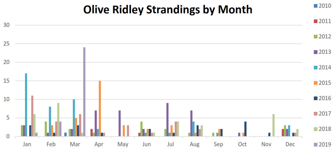 Olive Ridley turtle strandings by month (2010-2019)